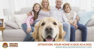 Attention: Your Home is Sick as a Dog