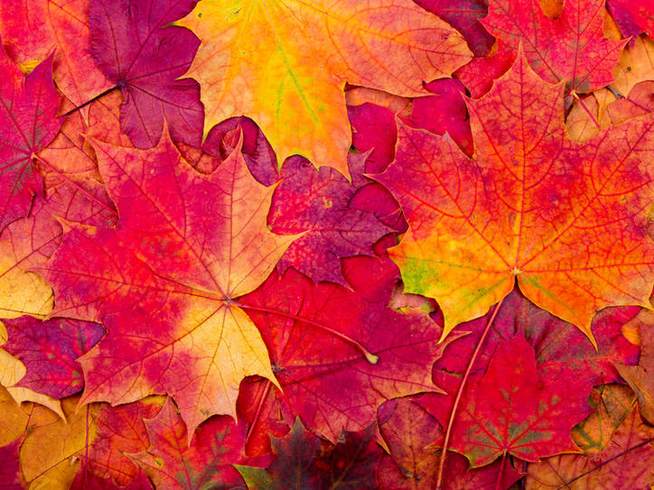 Fall/Winter Tuneup and Maintenance